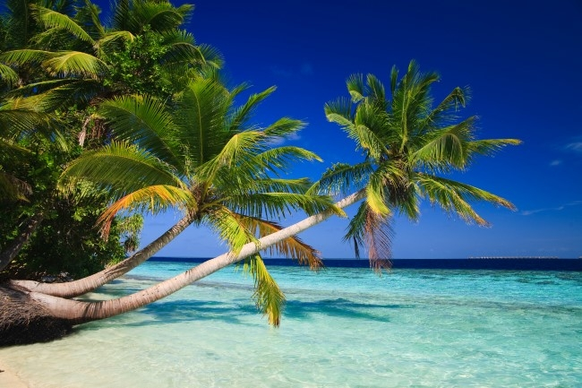 PUNTA CANA - Enero, Febrero y Marzo 2019 - Volá al Caribe! Promo 07 noches