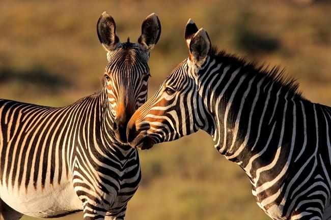SUDAFRICA PARQUE KRUGER y RUTA JARDIN - 11 Días - Salida 06 de Enero 2019